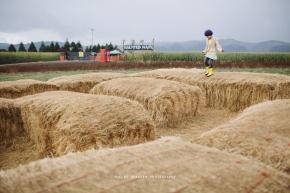 farm13-1